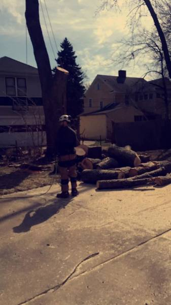 Tree Cleanup