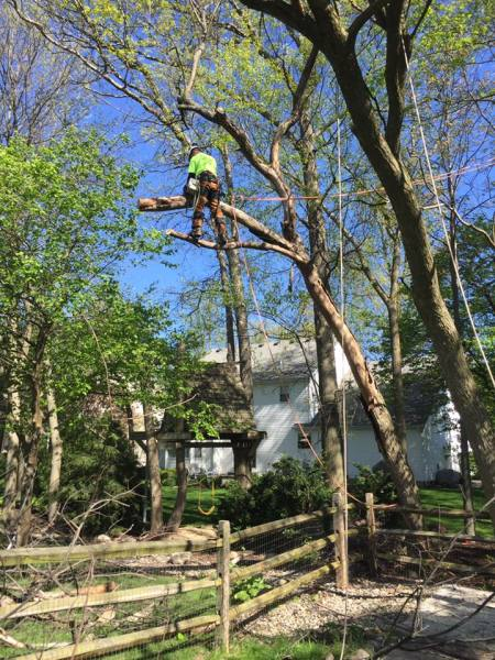 Customer Tree Removal, Cut Down Tree
