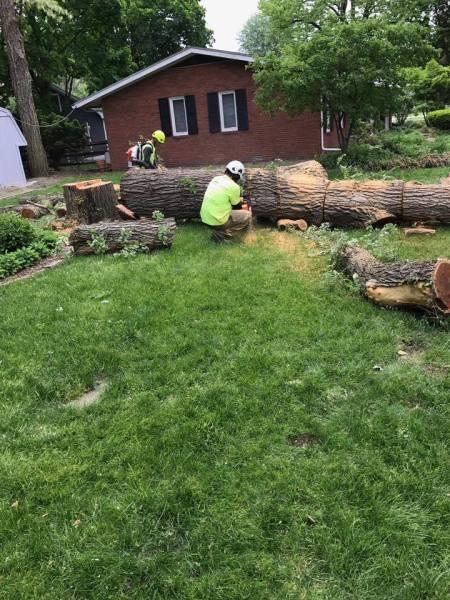 Log cleanup