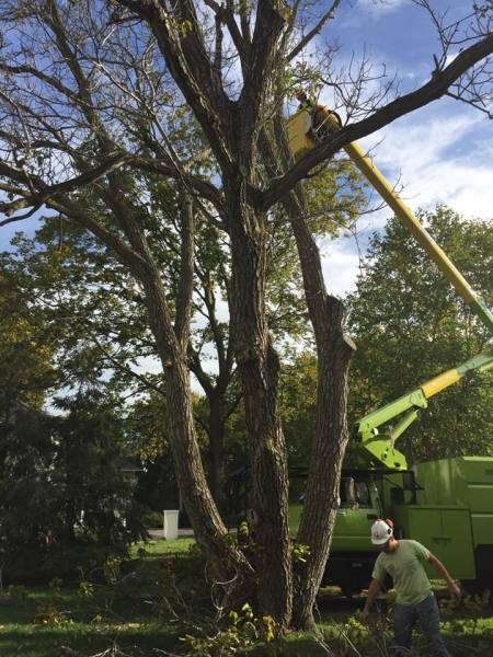 Rigging 101, Roping, Securing Tree