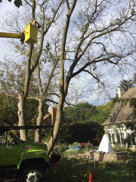 Bucket Truck tree removal