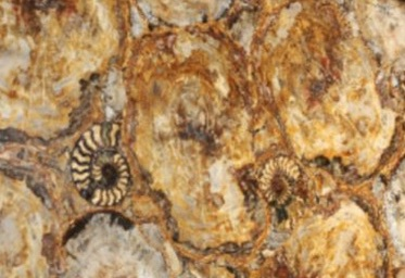 PETRIFIED YELLOW WOOD