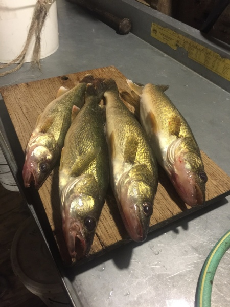 And More Walleye