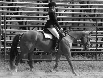LLHA Open Horse Show  - Entry form and show program