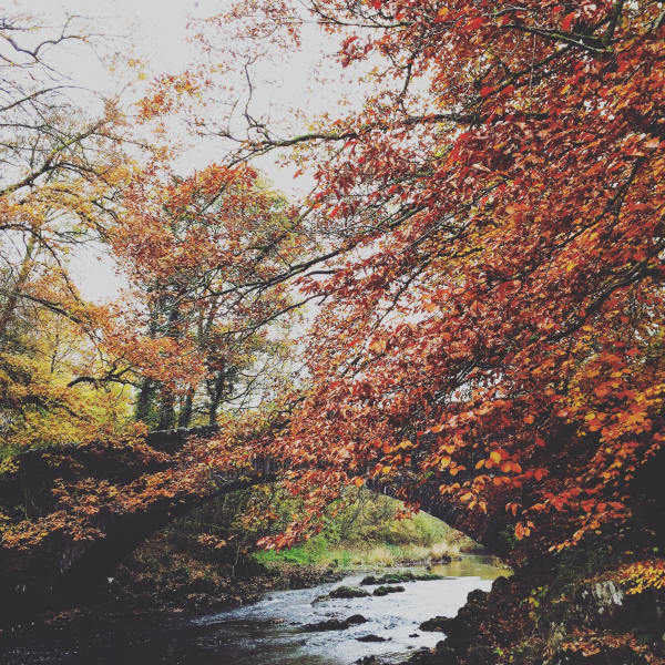 Autumn Walks, Streams and Story Scenes