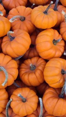 NEW!! Pumpkin Facial!!