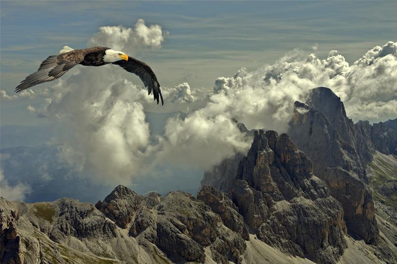 Eagle, sky, clouds, Mountains