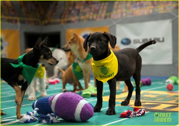 Dog Takes Knee During Puppy Bowl!