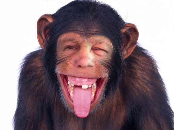Drunken Emotional Support Monkey Goes Berserk on Plane! Flings Excrement!