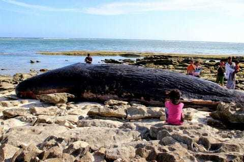 Dead Whale Found With Used Kardashian Condoms in Digestive System!