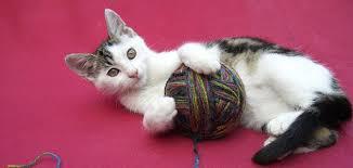 Kitten playing with yarn