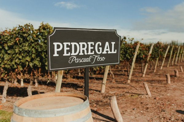 WINE REVIEW: PASCUAL TOSO