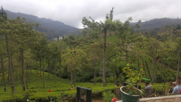 TEA IN SRI LANKA VS. THE WINE TRADE: SEVEN PARALLELS