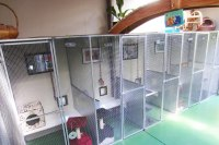 cattery standard suite