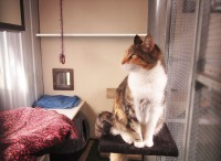 standard suite cattery