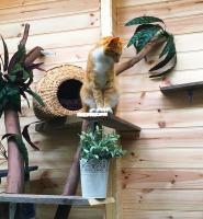 Ollie in Activity garden