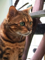 Cat at cattery