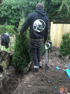 Tree & Hedge Planting