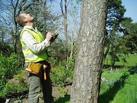 Tree Surveys