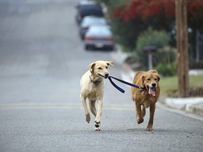 The surprising benefits of walking your dog! For you and your dog!