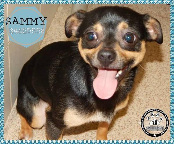 Sammy-AAS