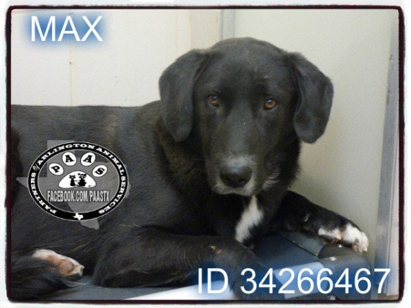 Max-AAS
