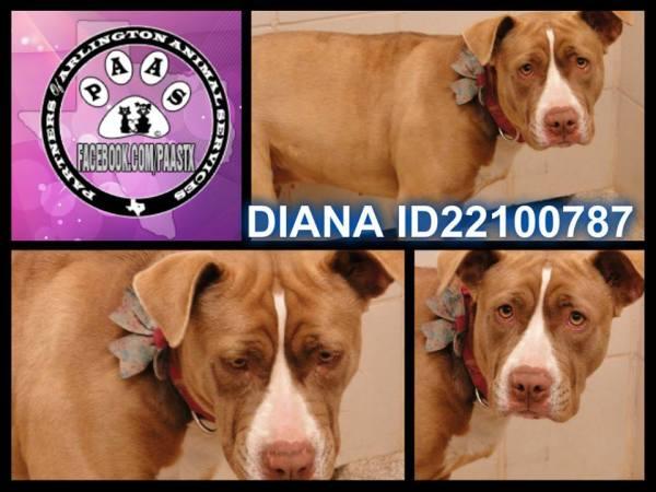 Diana-AAS