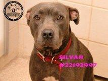 Silvah