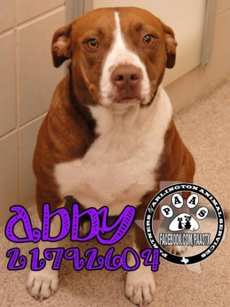 Abby-AAS