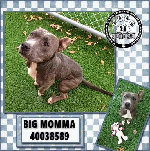 Big Momma