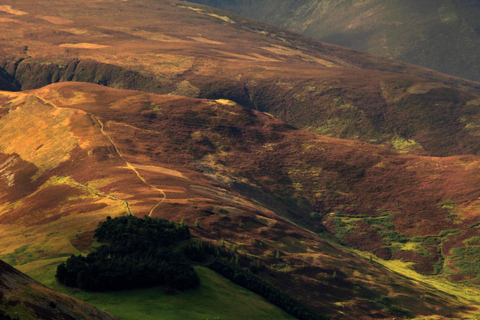 Scottish lowland