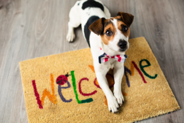 Tips for. . .Selling a Home with Pets!