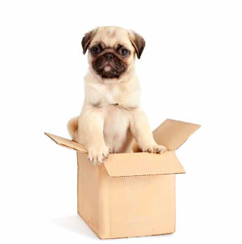 Tips for. . .Moving with Pets!