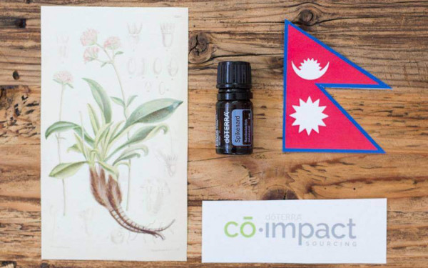 Spikenard Essential Oil Spotlight