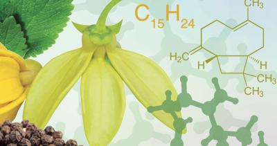 Die neuroprotektiven Wirkungen von Beta-Caryophyllen