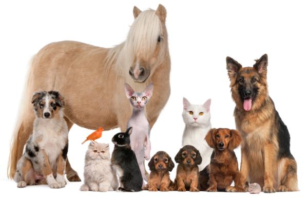 doTERRA Ätherische Öle & Haustiere