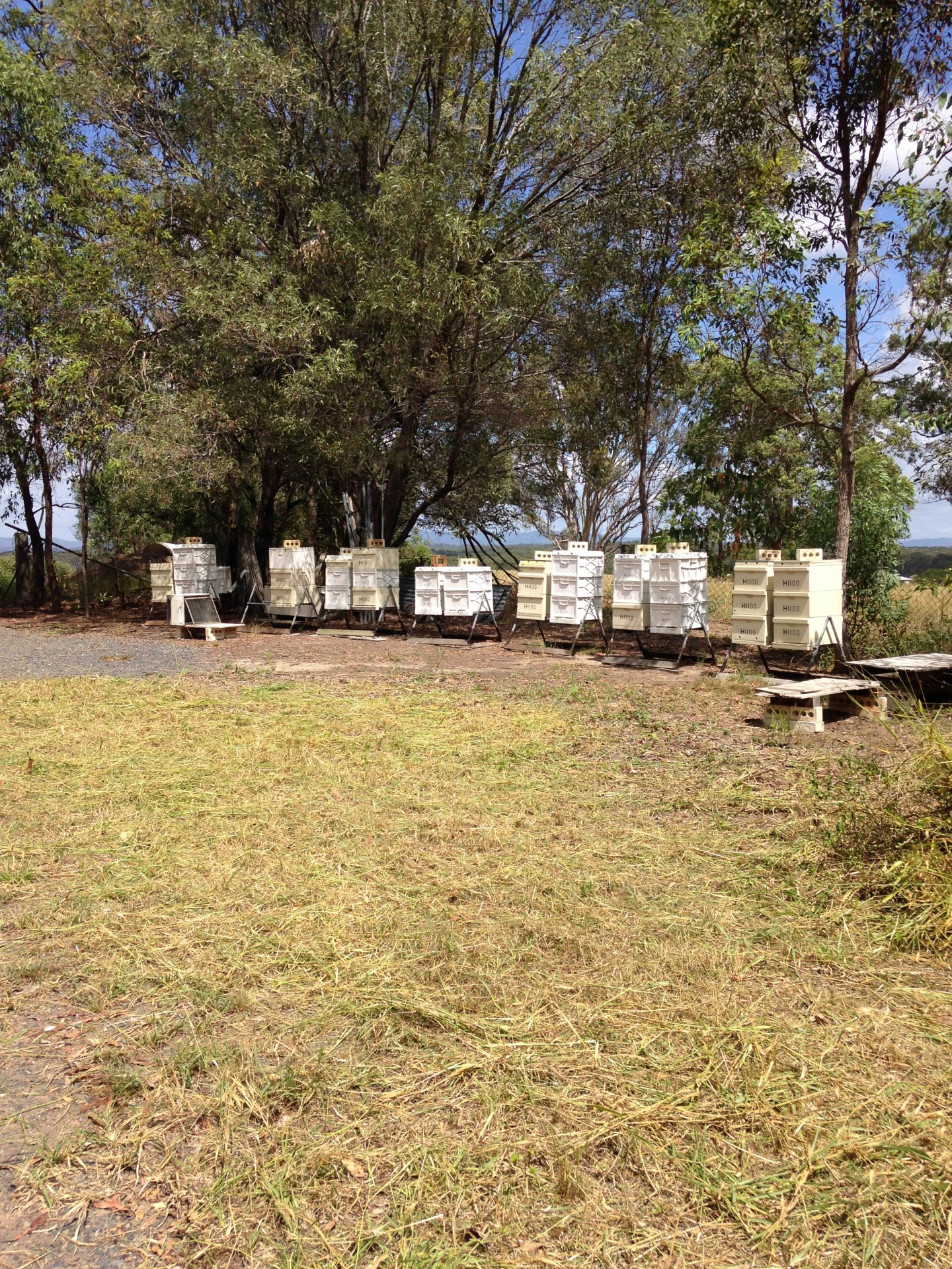 Bee cubes Apiary south west of Narangba