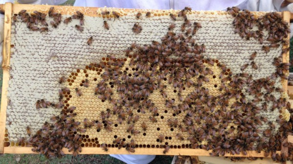 BeesBroodHoney Honeyworks