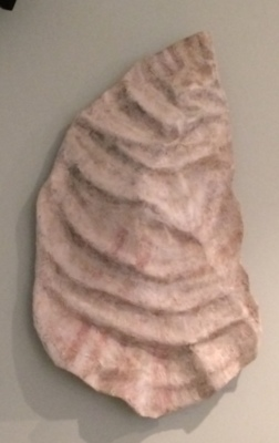 2 ft oyster shell