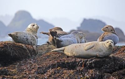 35-Seals - Oregon
