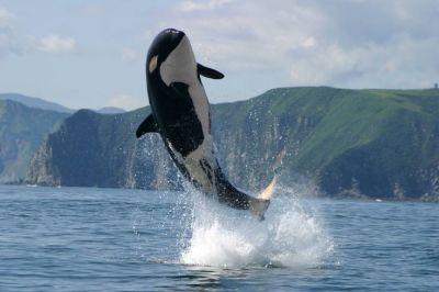 60-Whale off WA Coast
