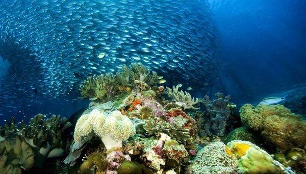 Virginia aquarium rocks, cleaned, dry Florida coral
