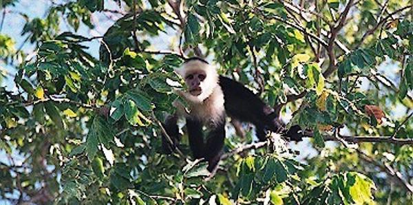 Monkey nearby