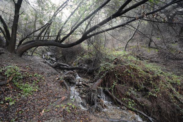 Water cascades down creek after a recent rain