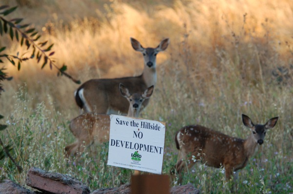 Please help preserve the open space