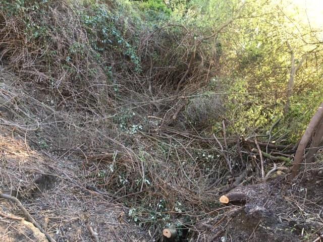 Riparian Zone Destruction