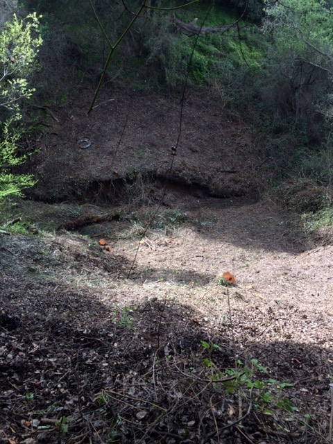 Destruction of Riparian Area