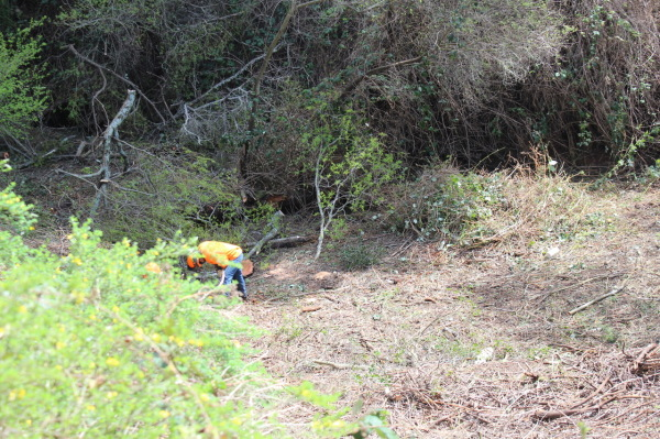 Men Cutting Riparian Zone