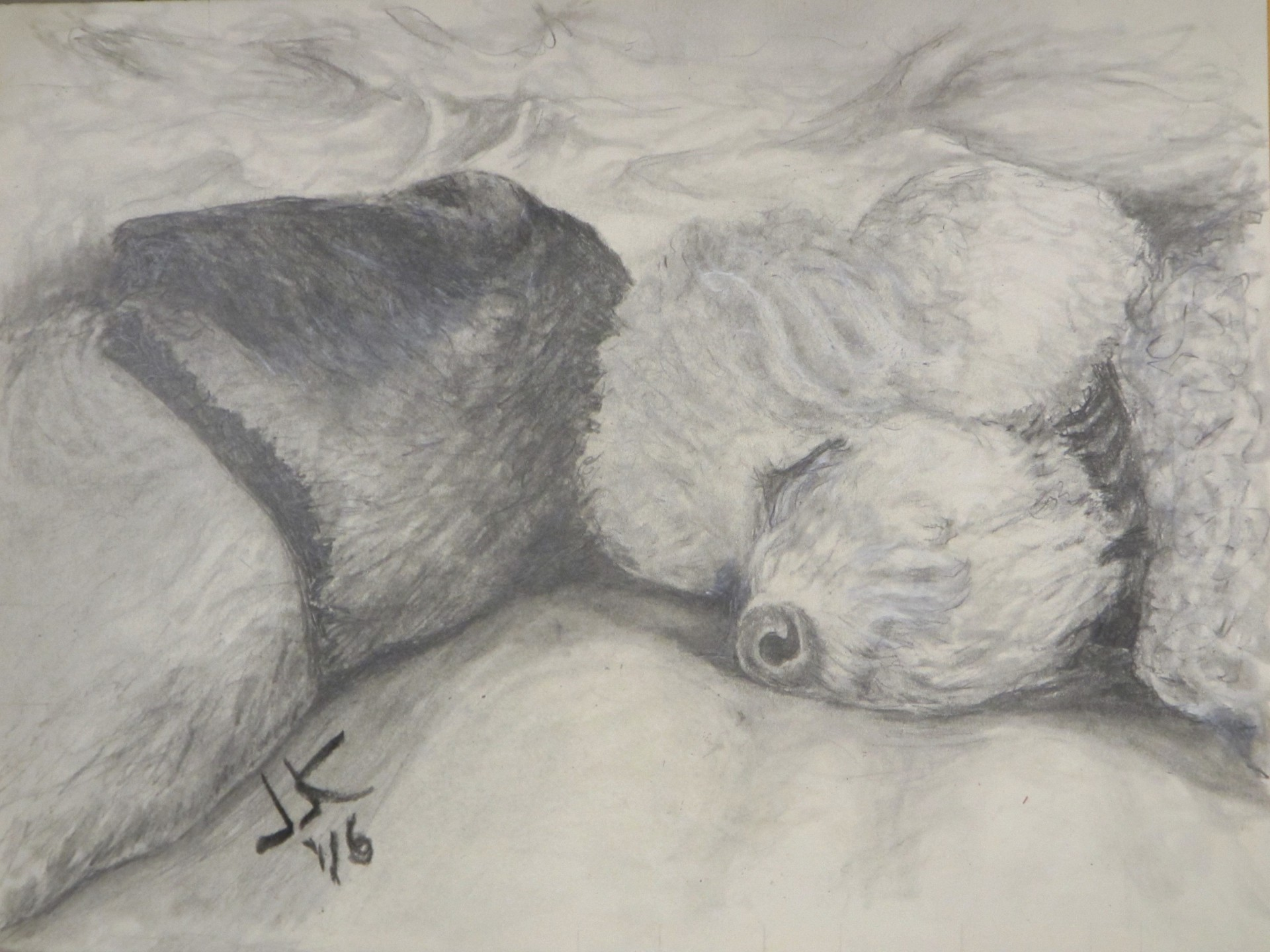 Pencil drawing of two dogs sleeping head to head in a soft bed.