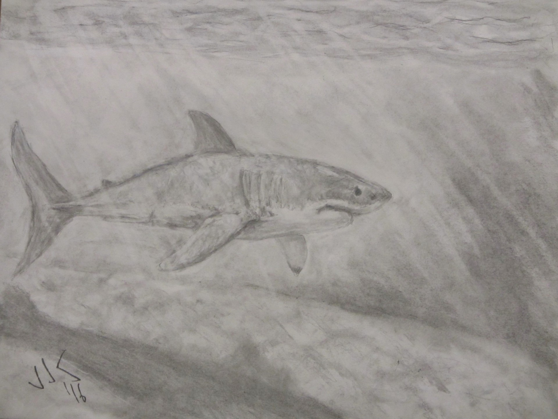 Pencil drawing of a great white shark under water.